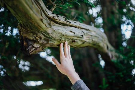 подходит дерево