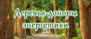 деревья-доноры