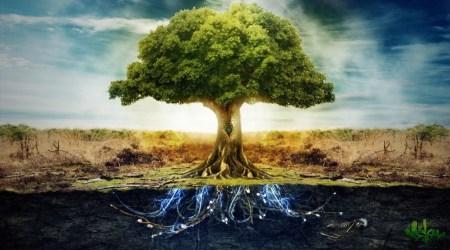деревья доноры