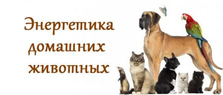 энергетика домашних животных
