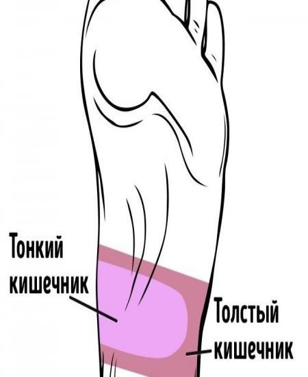 точки кишечника