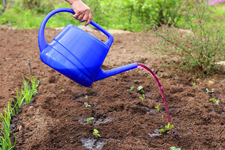 марганцовка и растения